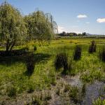 Humedal Los Batros como conflicto socioambiental en Chile: Aportes desde la academia